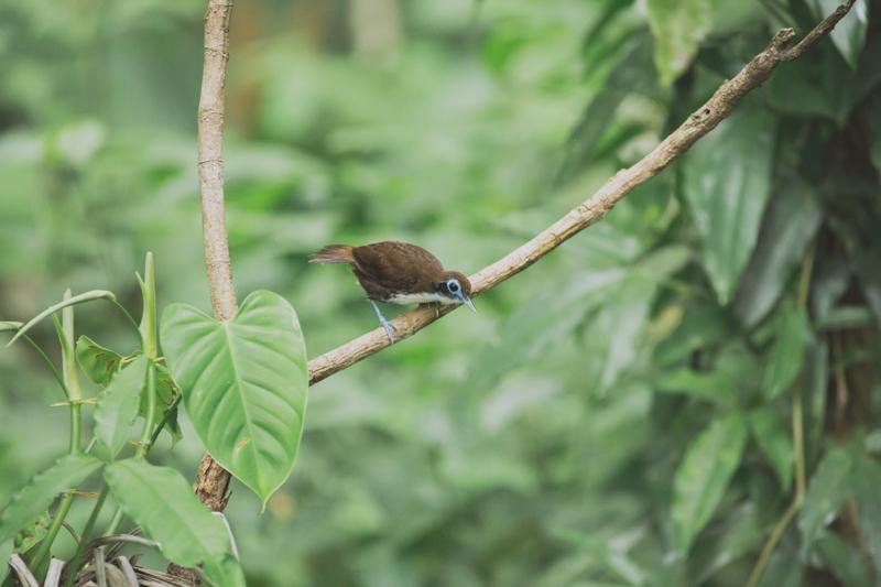 blog travel costa rica corcovado national park copyright paulinefashionblog.com  11 Costa Rica : CORCOVADO