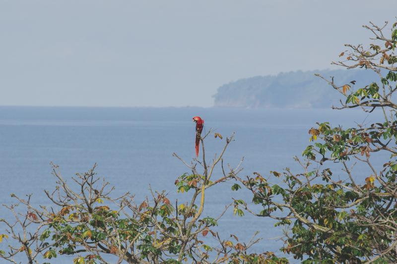 blog travel costa rica corcovado national park copyright paulinefashionblog.com  14 Costa Rica : CORCOVADO