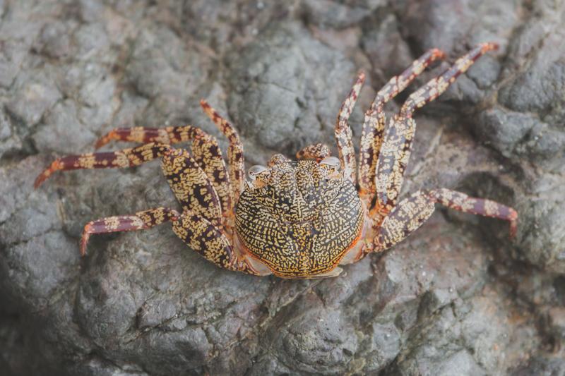 blog travel costa rica corcovado national park copyright paulinefashionblog.com  15 Costa Rica : CORCOVADO
