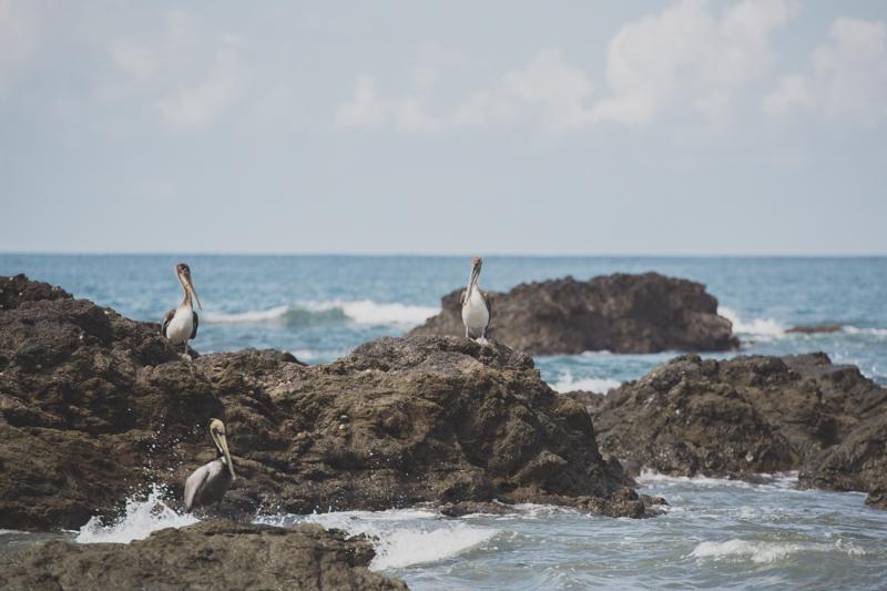 blog travel costa rica corcovado national park copyright paulinefashionblog.com  18 Costa Rica : CORCOVADO