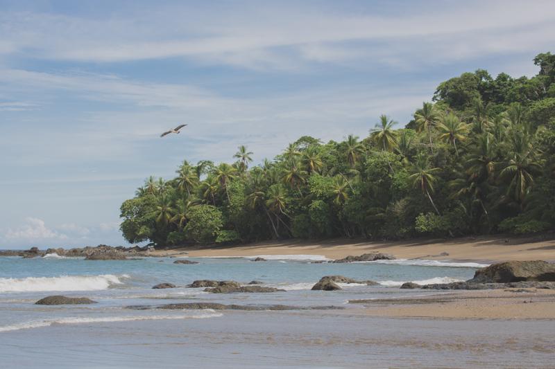 blog travel costa rica corcovado national park copyright paulinefashionblog.com  19 Costa Rica : CORCOVADO
