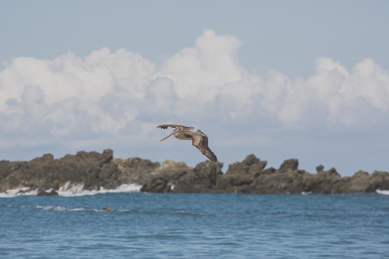 blog travel costa rica corcovado national park copyright paulinefashionblog.com  20 Costa Rica : CORCOVADO