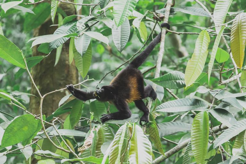 blog travel costa rica corcovado national park copyright paulinefashionblog.com  23 Costa Rica : CORCOVADO