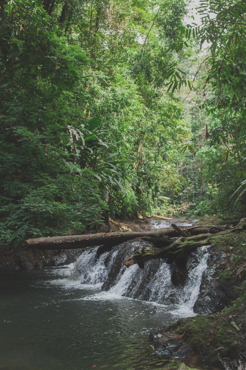 blog travel costa rica corcovado national park copyright paulinefashionblog.com  24 Costa Rica : CORCOVADO