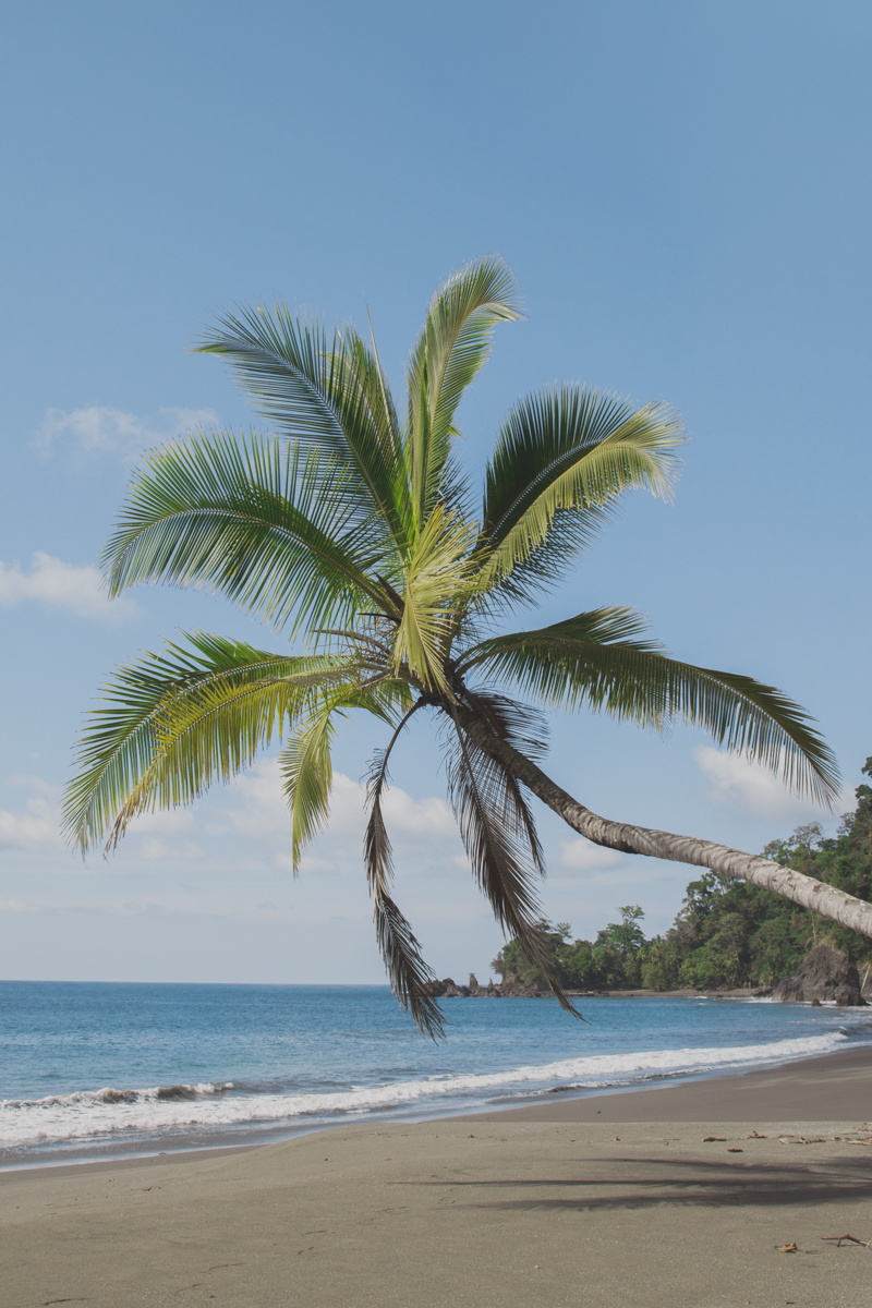 blog travel costa rica corcovado national park copyright paulinefashionblog.com  31 Costa Rica : CORCOVADO
