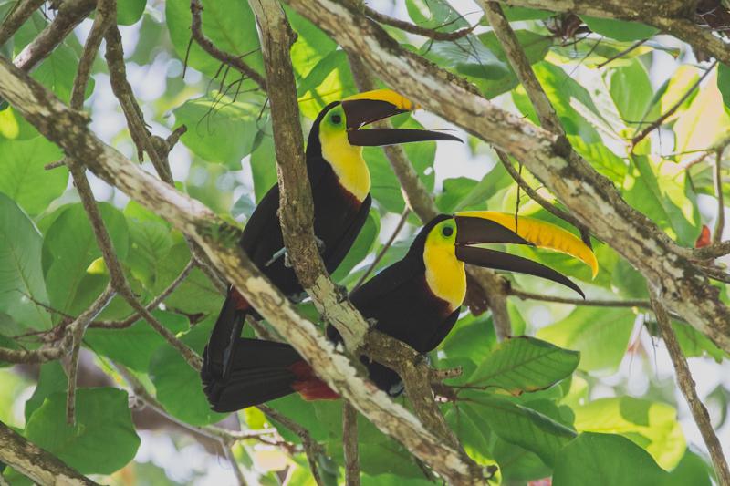 blog travel costa rica corcovado national park copyright paulinefashionblog.com  33 Costa Rica : CORCOVADO