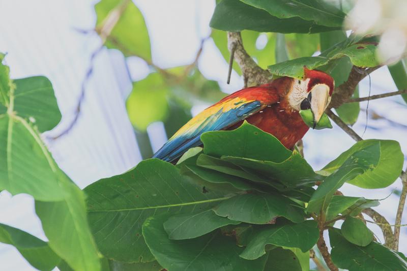 blog travel costa rica corcovado national park copyright paulinefashionblog.com  34 Costa Rica : CORCOVADO