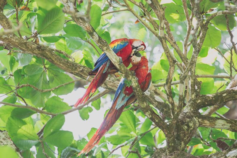 blog travel costa rica corcovado national park copyright paulinefashionblog.com  35 Costa Rica : CORCOVADO