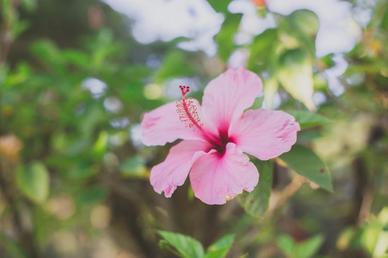 blog travel costa rica corcovado national park copyright paulinefashionblog.com  36 Costa Rica : CORCOVADO