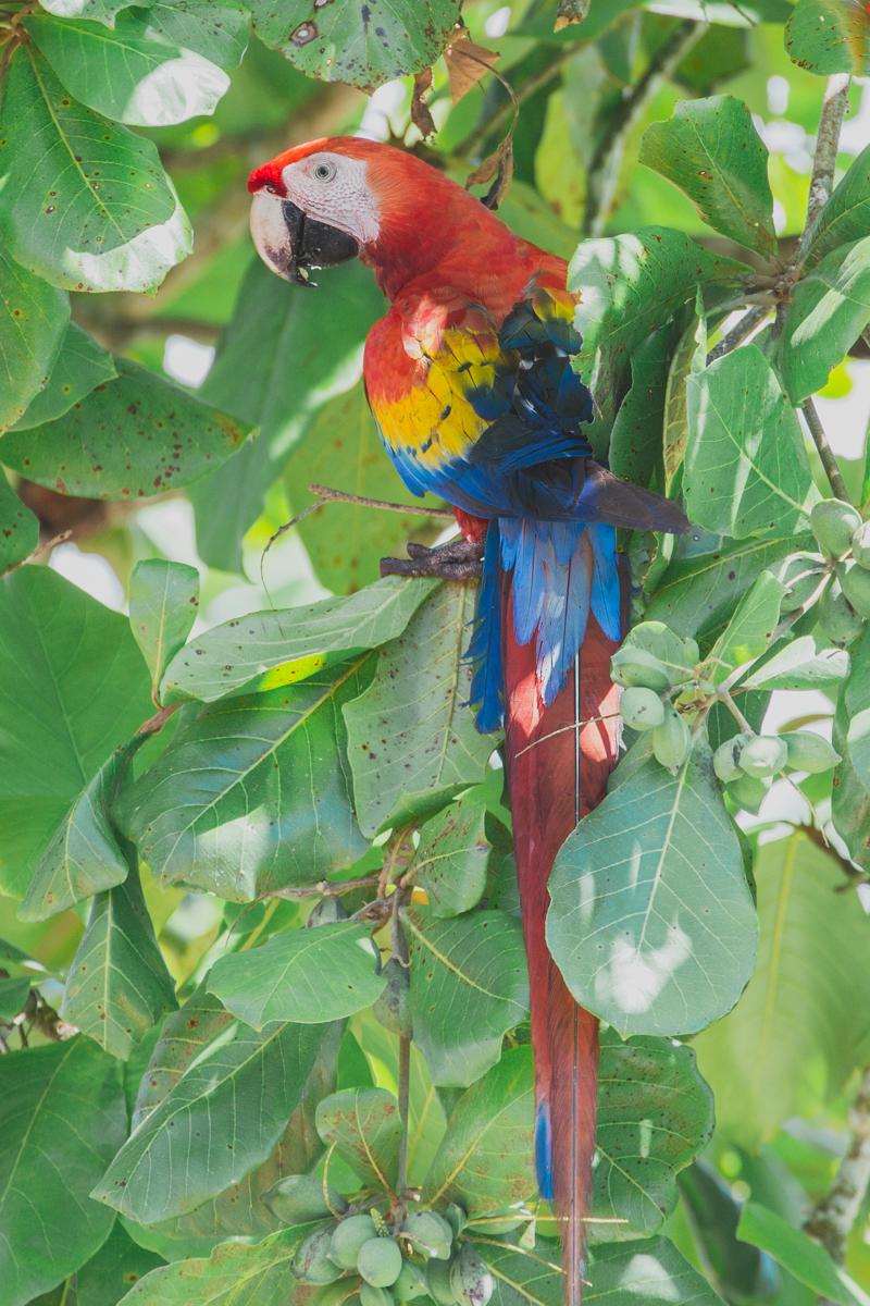blog travel costa rica corcovado national park copyright paulinefashionblog.com  5 Costa Rica : CORCOVADO