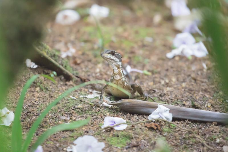 blog travel costa rica corcovado national park copyright paulinefashionblog.com  9 Costa Rica : CORCOVADO