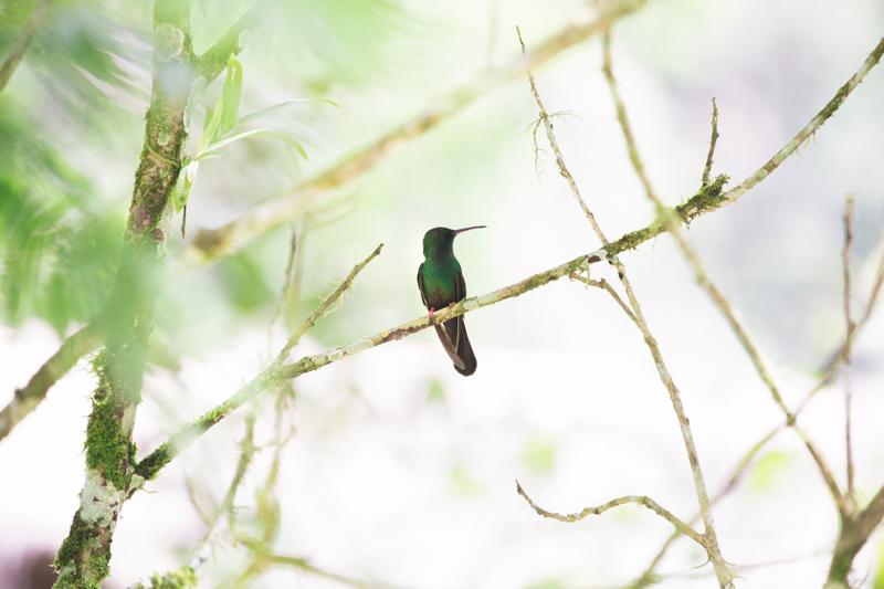 blog travel costa rica pacuare lodge rainforest wildlife - copyright paulinefashionblog.com_-10