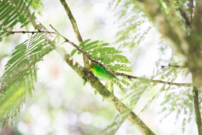 blog travel costa rica pacuare lodge rainforest wildlife - copyright paulinefashionblog.com_-11