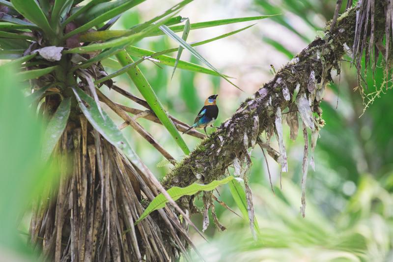 blog travel costa rica pacuare lodge rainforest wildlife - copyright paulinefashionblog.com_-12