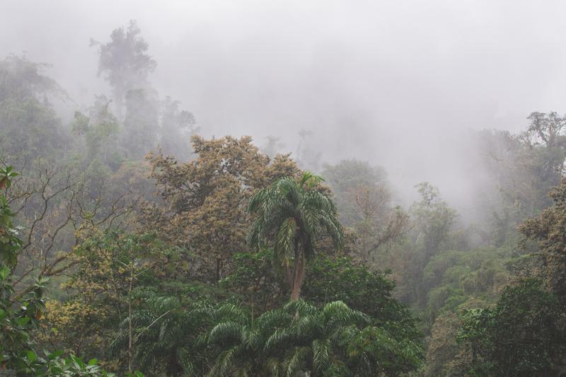 blog travel costa rica pacuare lodge rainforest wildlife - copyright paulinefashionblog.com_-15