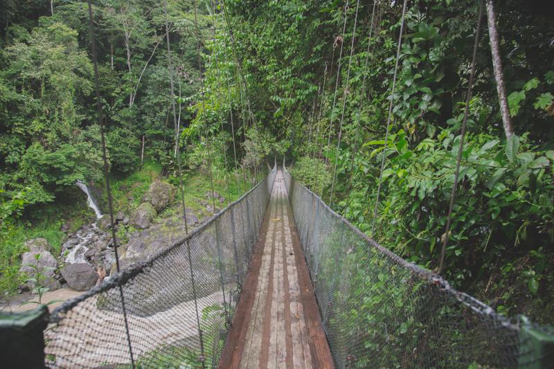 blog travel costa rica pacuare lodge rainforest wildlife - copyright paulinefashionblog.com_-17