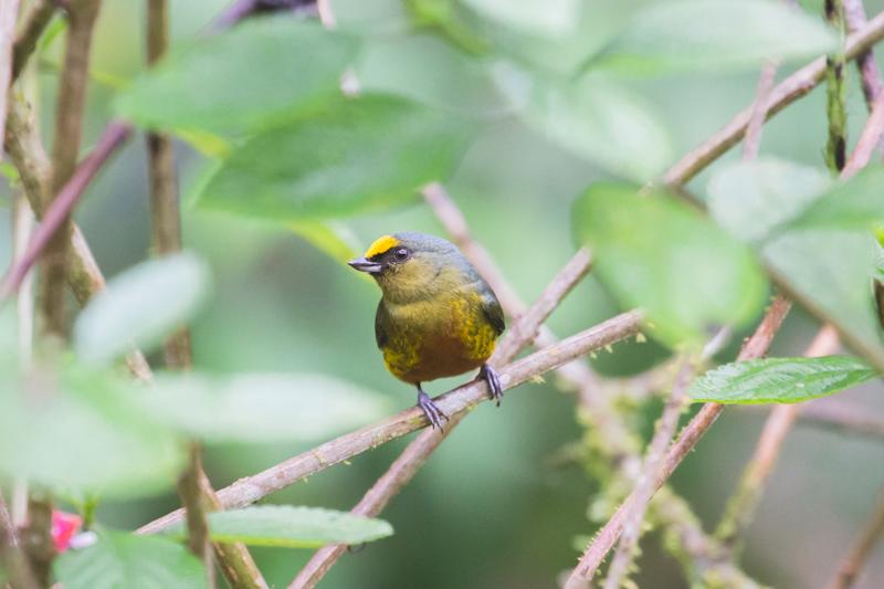 blog travel costa rica pacuare lodge rainforest wildlife - copyright paulinefashionblog.com_-18