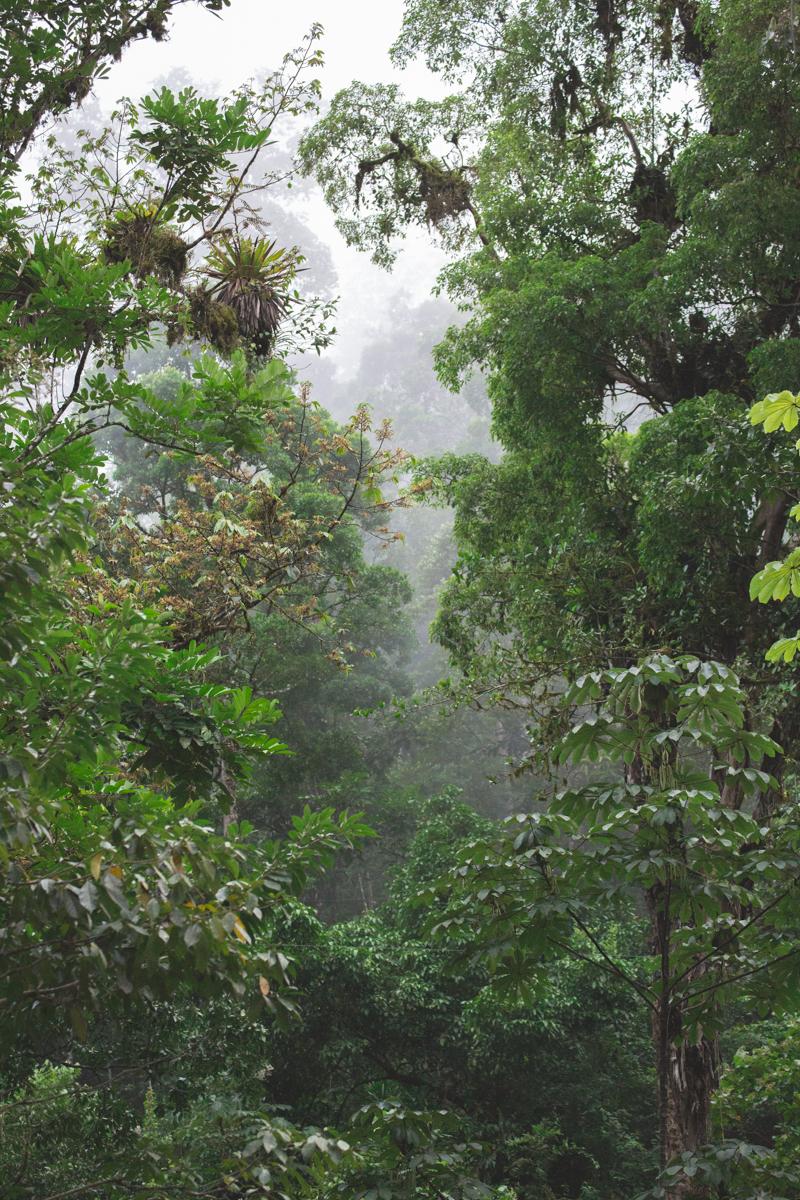 blog travel costa rica pacuare lodge rainforest wildlife - copyright paulinefashionblog.com_-28