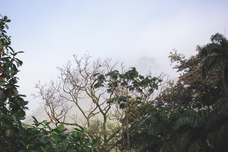 blog travel costa rica pacuare lodge rainforest wildlife - copyright paulinefashionblog.com_-3