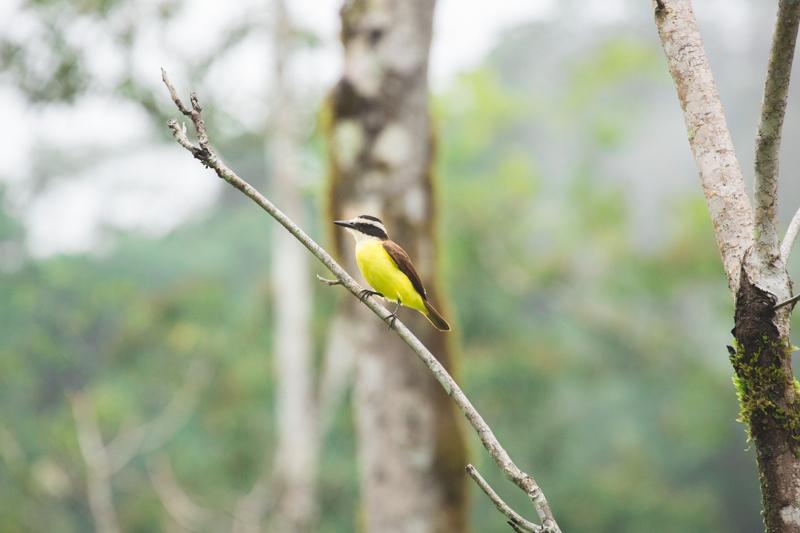 blog travel costa rica pacuare lodge rainforest wildlife - copyright paulinefashionblog.com_-32