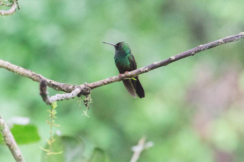 blog travel costa rica pacuare lodge rainforest wildlife - copyright paulinefashionblog.com_-34