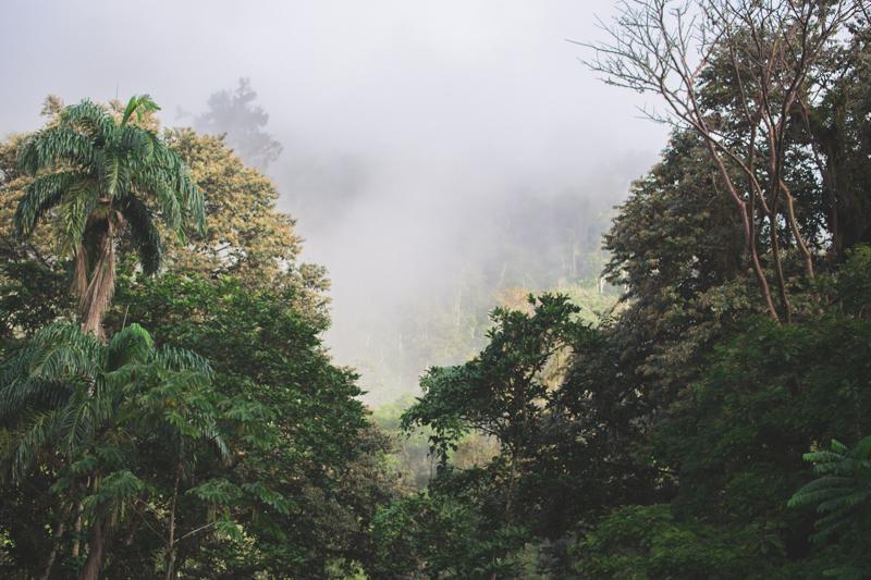 blog travel costa rica pacuare lodge rainforest wildlife - copyright paulinefashionblog.com_-5