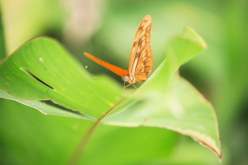 blog travel costa rica pacuare lodge rainforest wildlife - copyright paulinefashionblog.com_-9