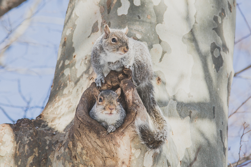 cuteness overload squirrels in the snow copyright paulinefashionblog.com  4 Bibendum