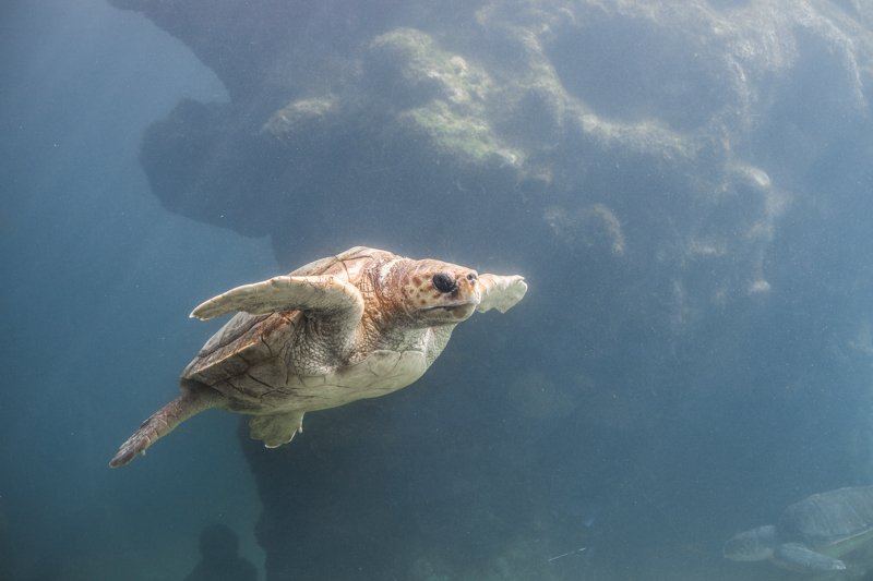 blog voyage ile de la reunion refuge tortues kelonia saint leu - copyright paulinefashionblog.com_-3