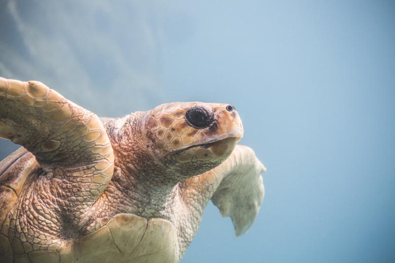 blog voyage ile de la reunion refuge tortues kelonia saint leu copyright paulinefashionblog.com  4 Île de la Réunion   day 1