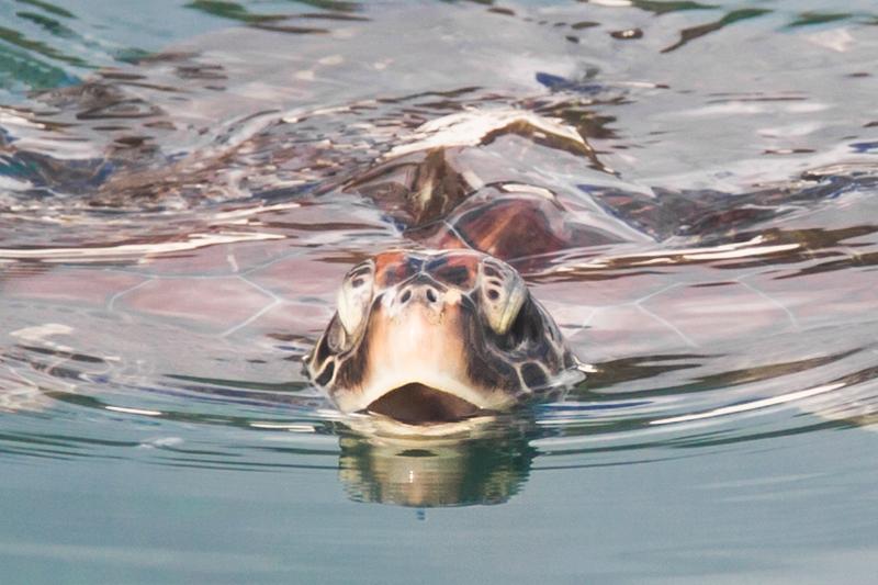 blog voyage ile de la reunion refuge tortues kelonia saint leu copyright paulinefashionblog.com  Île de la Réunion   day 1