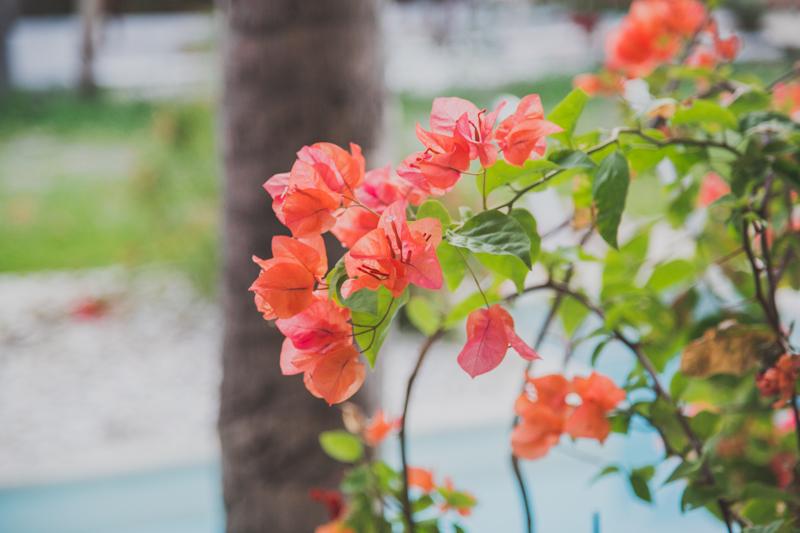 blog voyage ile de la reunion saint gilles les bains hotel le saint alexis copyright paulinefashionblog.com  15 Île de la Réunion   day 1