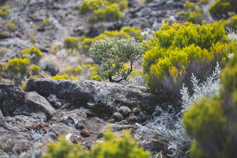 ile de la reunion blog voyage volcan blue margouillat l amberic - copyright paulinefashionblog.com_-8