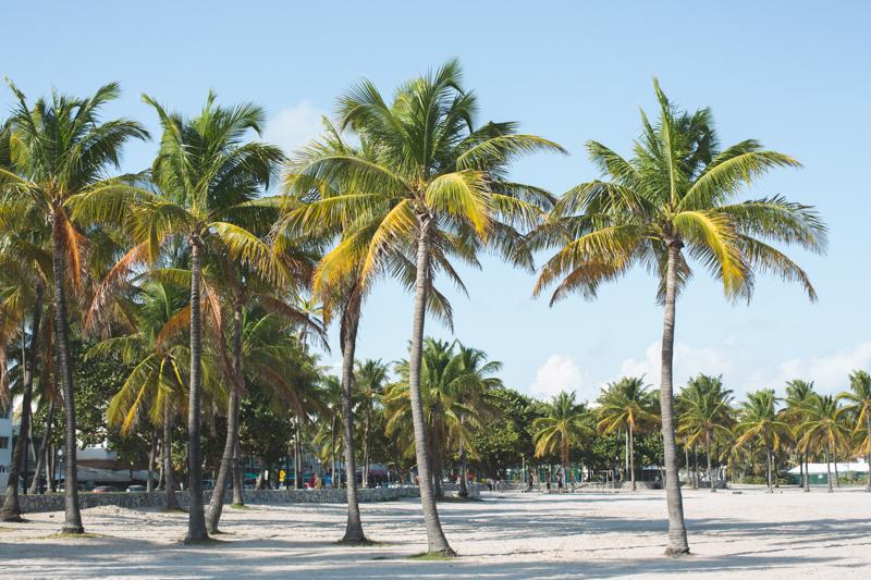 48 hours in miami cityguide south beach wynwood little havana copyright paulinefashionblog.com  72 MIAMI BEACH   cityguide