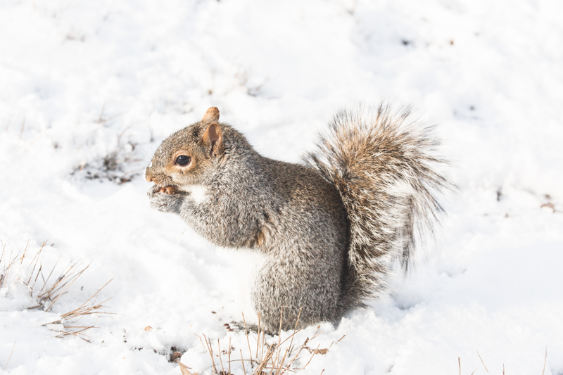 look ecureuils neige central park squirrels snow - copyright paulinefashionblog.com_-2