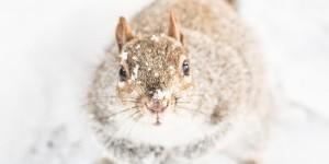 look ecureuils neige central park squirrels snow - copyright paulinefashionblog.com_-4