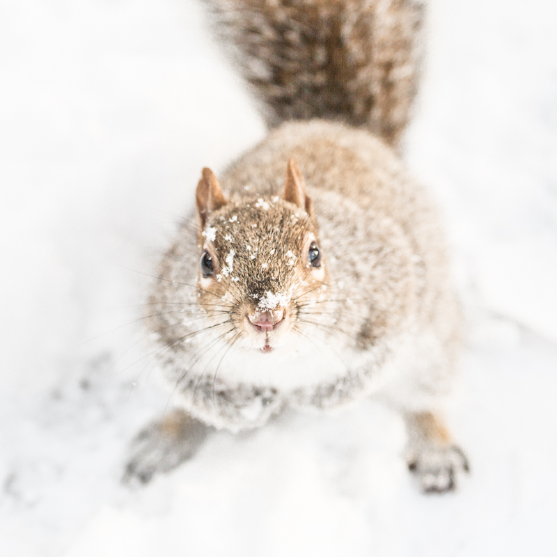 look ecureuils neige central park squirrels snow - copyright paulinefashionblog.com_-4