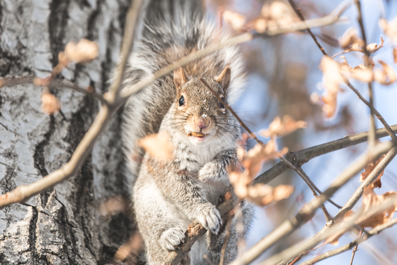 look ecureuils neige central park squirrels snow - copyright paulinefashionblog.com_-5