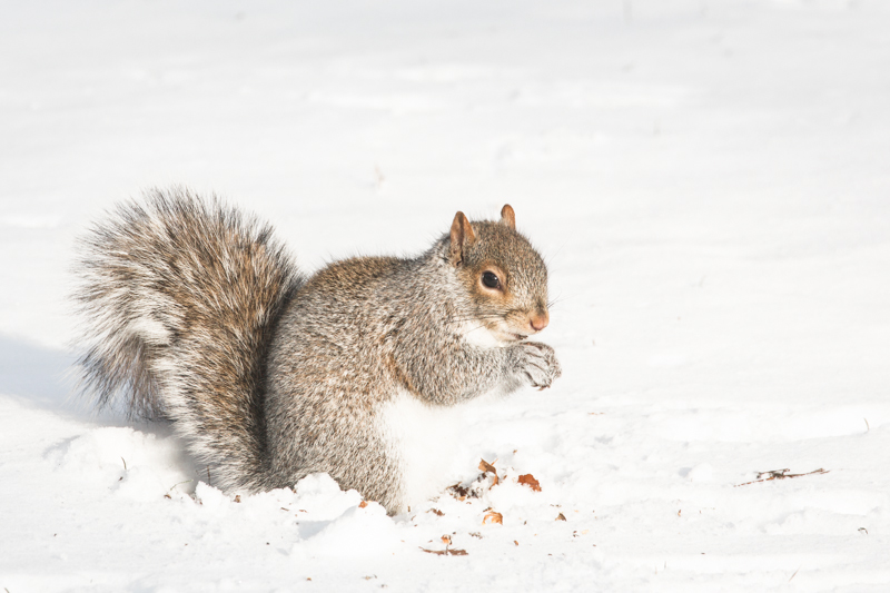 look ecureuils neige central park squirrels snow - copyright paulinefashionblog.com_