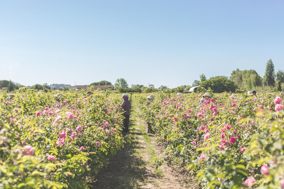 1100 chanel grasse copyright Pauline paulinefashionblog.com 2 2 La Rose de Mai de CHANEL