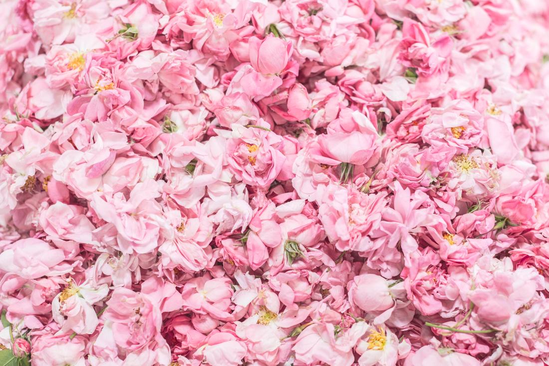 1100 chanel grasse copyright Pauline paulinefashionblog.com 28 La Rose de Mai de CHANEL