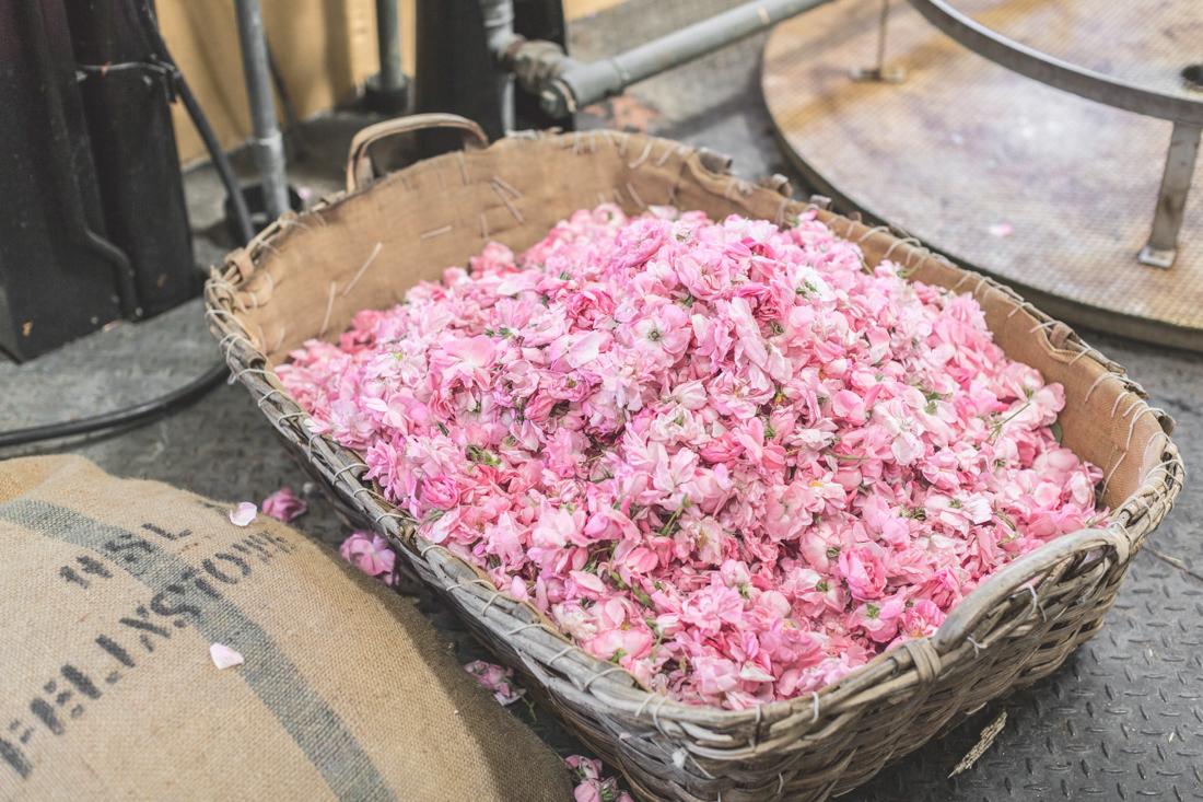 1100 chanel grasse copyright Pauline paulinefashionblog.com 30 La Rose de Mai de CHANEL