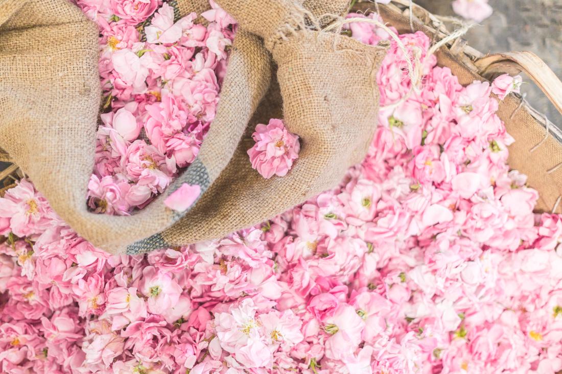 1100 chanel grasse - copyright Pauline paulinefashionblog.com-31