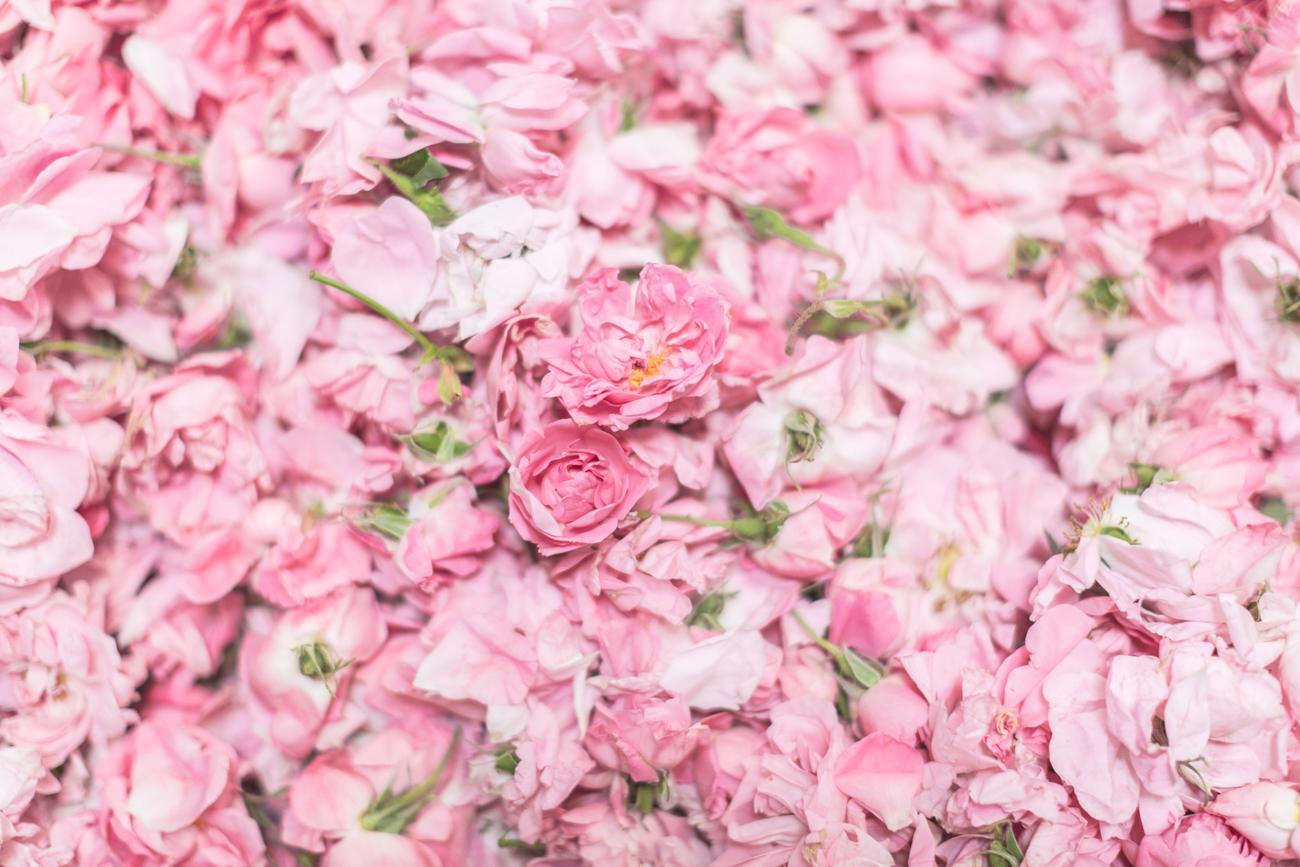 1300 chanel grasse rose de mai - copyright Pauline paulinefashionblog.com-1